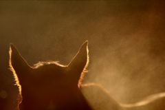 A silhouette of a horse. A surreal photo of a horse in the dust with backlighting. Dust is kicked up and the sun sets Stock Photos