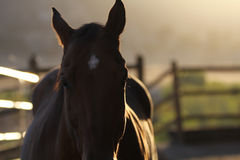 A silhouette of a horse. Stock Images