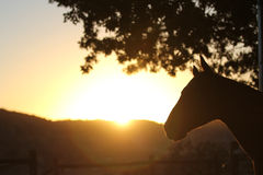 A silhouette of a horse. A surreal photo of a horse in the morning light. Plenty of text area Royalty Free Stock Photo