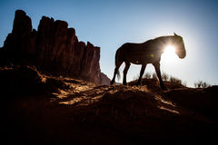 Silhouette of horse walking in front of desert mesa Royalty Free Stock Images