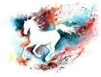 Silhouette of  horse. White thoroughbred trotter on the move Stock Images
