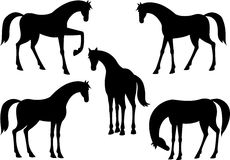 Silhouette of horses Stock Images