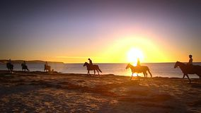 Silhouette of horses on beach