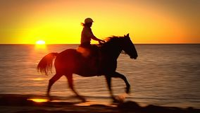 Silhouette of horses galloping stock footage