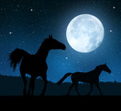 Silhouette of a horses. In the night sky with the moon Stock Image