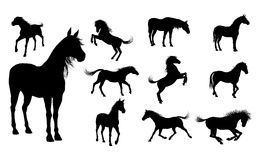 Silhouette Horses Royalty Free Stock Image
