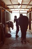 Silhouette of horsewomen owner harnessing the stallion in stable. Silhouette of young horsewomen owner harnessing the stallion in stable. Vertical image with royalty free stock image