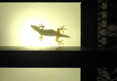A silhouette of a house or domestic lizard Stock Photo