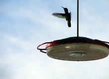 Silhouette of a hummingbird. Silhouette of hummingbird in flight Stock Photo