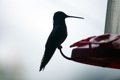 Silhouette of a hummingbird Stock Images