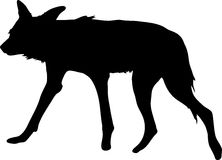 Silhouette of a hungry and nervous wild dog. Hand drawn vector illustration isolated on white background Royalty Free Stock Image