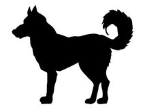 Silhouette of husky. Series with pets Royalty Free Stock Photo