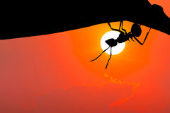 Silhouette image. Ant hanging on leaf. Silhouette image. Ant hanging on leaf with sunset Stock Photo