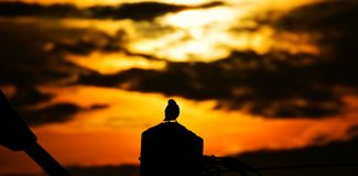 Silhouette Image of Bird Standing Royalty Free Stock Image