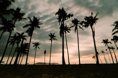 Silhouette image of coconut tree along the beach during sunset. Sunrise at Terengganu, Malaysia Stock Images