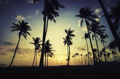 Silhouette image of coconut tree along the coastline Stock Photos