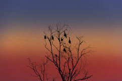 Silhouette image of dead tree Royalty Free Stock Image