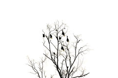 Silhouette image of dead tree Royalty Free Stock Photo