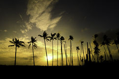 Silhouette image group of coconut tree near shore during sunset sunrise. Beautiful moment, silhouette image group of coconut tree near shore during sunset Royalty Free Stock Photos