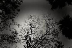 The silhouette image of some trees in a black and white frame royalty free stock photos