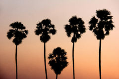 Silhouette image of Toddy palm trees against sunset background Stock Photo