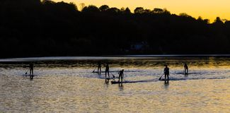 Paddle Boarders. Silhouette images of Paddle Boarders on River Tyne, at Newburn, Newcastle upon Tyne, England, UK. At sunset royalty free stock photo