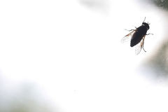 The silhouette of insect on the dirty window glass Stock Image