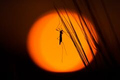 Silhouette of insect on strands Stock Photo