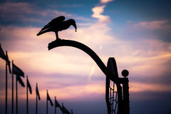 Silhouette of iron crow. On evening sky backgroung in Budapest Royalty Free Stock Photography