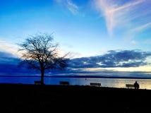 Silhouette isolée d'arbre Photos libres de droits