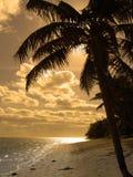 Silhouette jaune Image libre de droits