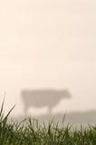 Silhouette of Jersey cow Royalty Free Stock Photo