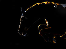 Silhouette of jumping horse on black background Royalty Free Stock Photography