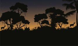 Silhouette of jungle beauty landscape Stock Photo