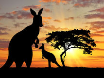 Silhouette of a kangaroo with a baby Royalty Free Stock Photos