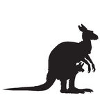 Silhouette of a kangaroo with a baby Royalty Free Stock Photo