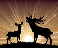 Silhouette a kangaroo and deer the standing in the bright dusk Royalty Free Stock Photo