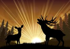 Silhouette a kangaroo and deer the standing in the bright dusk Royalty Free Stock Image