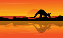 Silhouette kangaroo on the river landscape Royalty Free Stock Photo