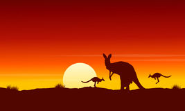 Silhouette kangaroo at sunrise landscape Royalty Free Stock Photography