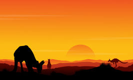 Silhouette kangaroo at sunset scenery Royalty Free Stock Photography