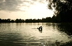 Kids in the waters of a lake at dusk. Silhouette of a kids swimming and playing in the lake waters at dusk royalty free stock photography