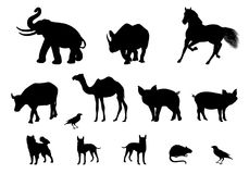 Silhouette Kind of animal chart. Vector design Royalty Free Stock Photo