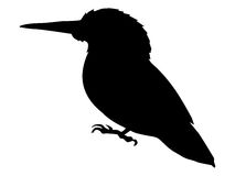 Silhouette of kingfisher. Bird series Royalty Free Stock Photo