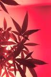 Silhouette légère rose de marijuana Photos libres de droits