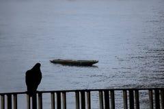 Silhouette l'oiseau regardant le bateau de tha Image libre de droits