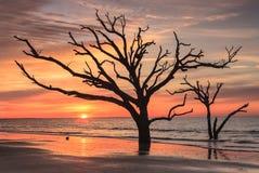 Silhouette la Caroline du Sud de solitude de lever de soleil Photographie stock