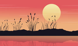 Silhouette of lake with coarse grass landscape Stock Images