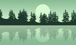 Silhouette of lake with spruce scenery Stock Photos
