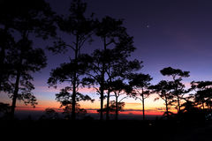 Silhouette landscape with pine forest at Phu Soi Dao national park, Thailand Royalty Free Stock Images